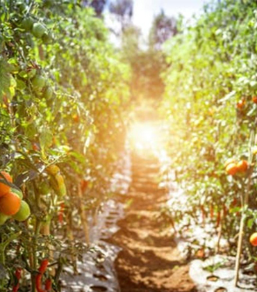 How Food Tech Can Help Achieve Sustainable Food System