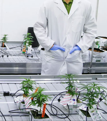 How Innovative Technology is Reshaping the Cannabis Industry
