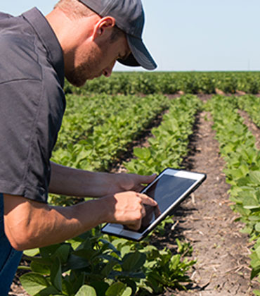 How can Environmental Monitoring Eliminate Issues in the Food Supply Chain?