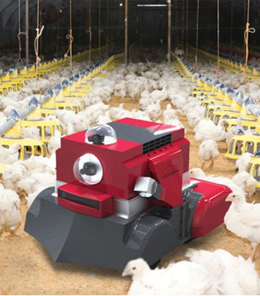 How is the Adoption of Robotics Transforming the Poultry Industry?