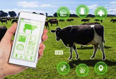 How IoT is Revolutionizing Livestock Health-Promoting Data-Driven Decision-Making