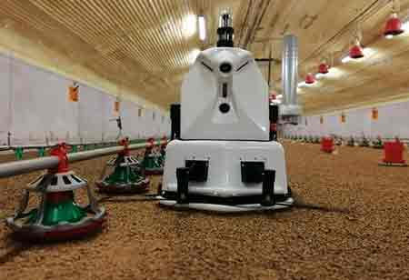 How Robots Helps Farmers in Poultry Sector?