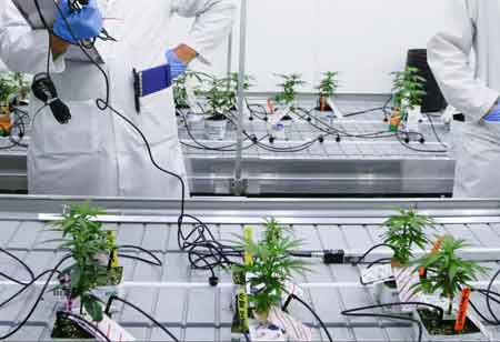How Innovative Technologies Enhance the Growth of Cannabis Industry