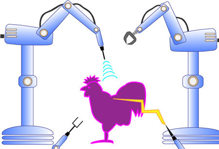 How AI Helps in Poultry Management