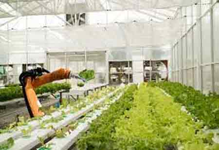 How Automating Enhances Food Production and Distribution