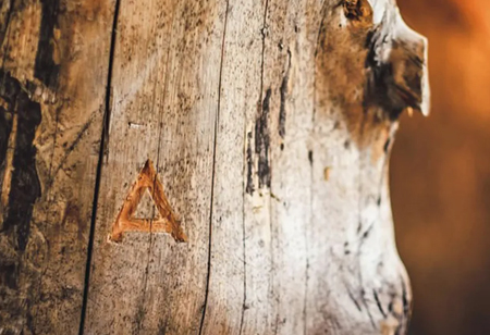 Arbiom to Commercialize the Wood-to-Food Technology