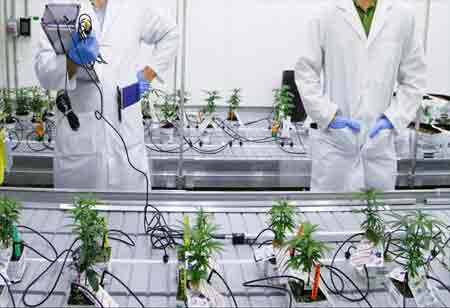New Technologies in the Cannabis Industry