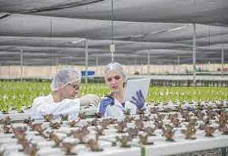 Technology's Role in Making Food Sector More Sustainable