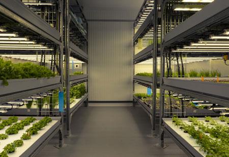 Building Nutritious Green Farms in Concrete Jungles