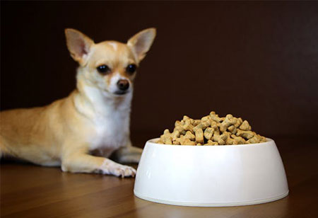 Pet Parents' Expectations Defining the Tendencies in Pet Food