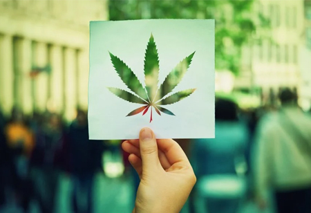 Top 4 Cannabis Trends to Look for
